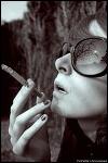 stokrotka - zdjęcie